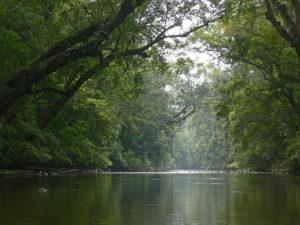 10-taman-negara-malaysia